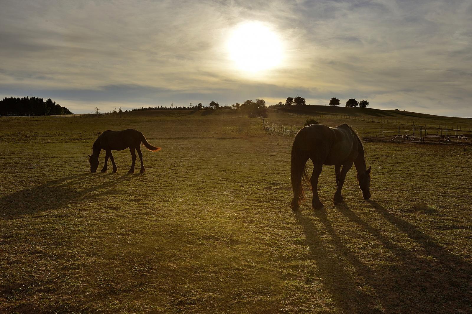 Západ slunce u koní